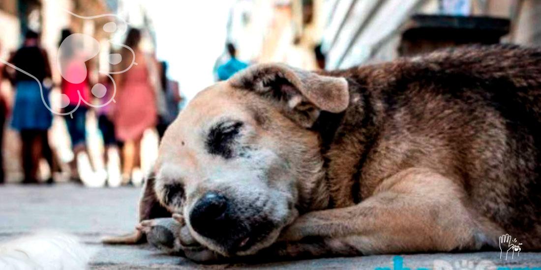 día internacional de los animales callejeros