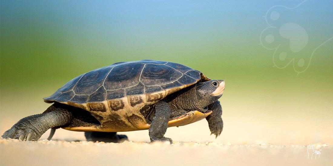 día mundial de las tortugas