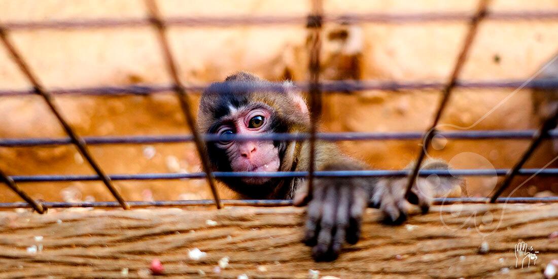 día mundial de los animales en laboratorio
