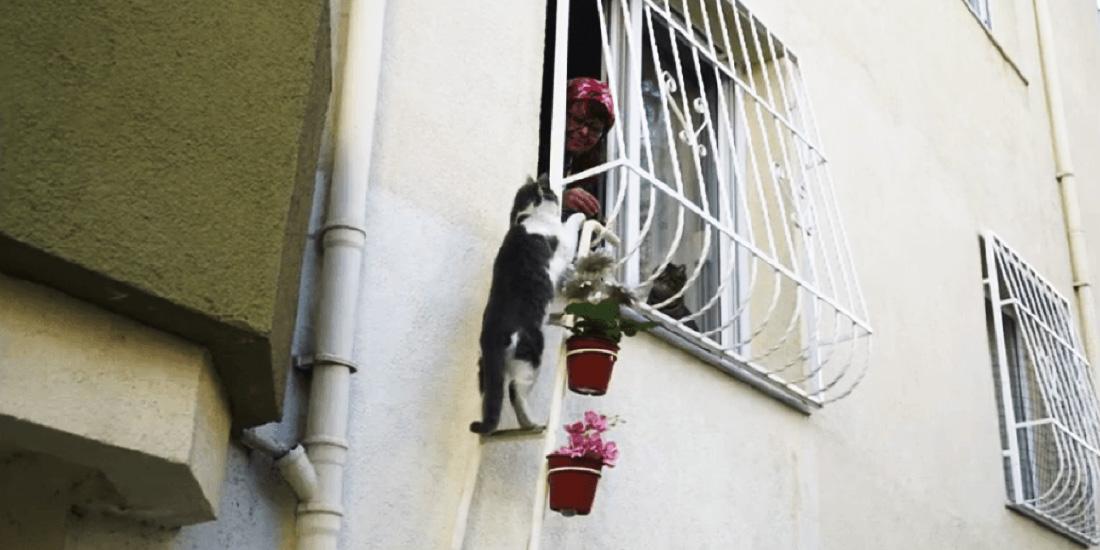 escalera mágica para animales callejeros