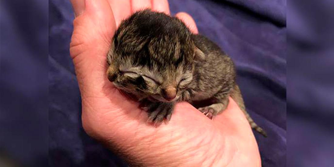 gato con dos caras nace en oregon