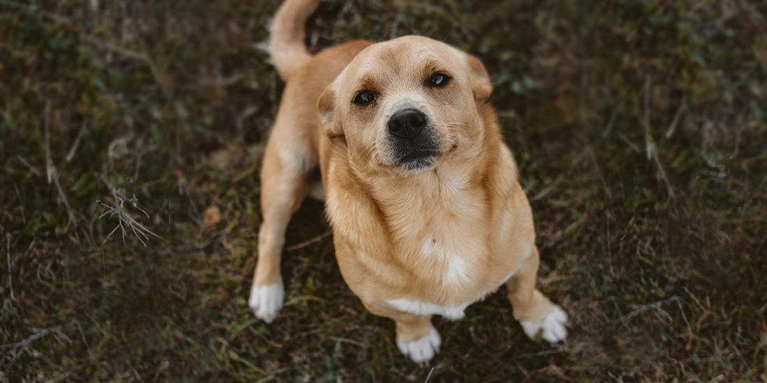 ¿los perros entienden palabras?