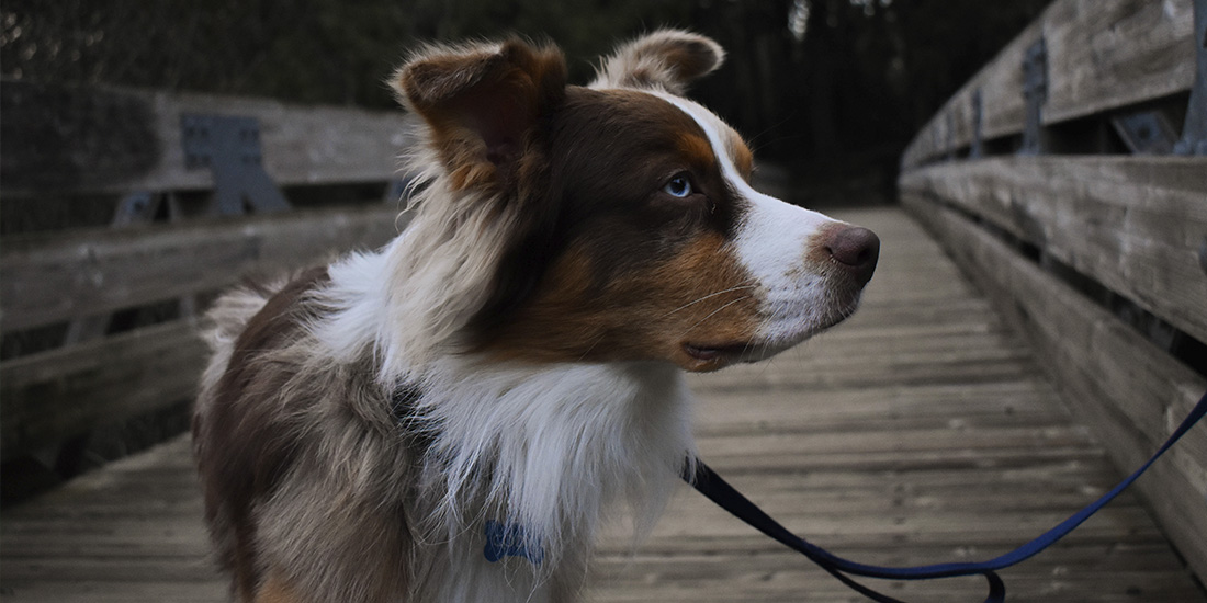multa si paseas a tu perro sin correa