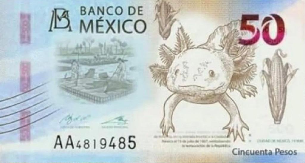 nuevo billete de $50 pesos mexicanos tendrá la imagen de un ajolote