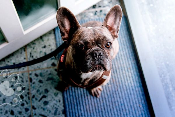 pasear a tu perro durante la emergencia por coronavirus
