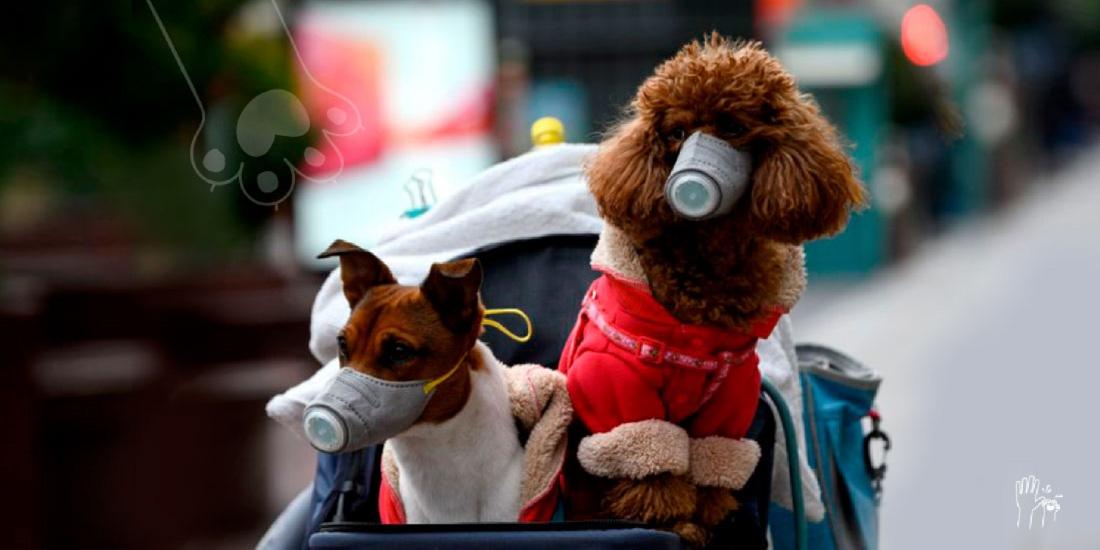 perro en hong kong da positivo en coronavirus