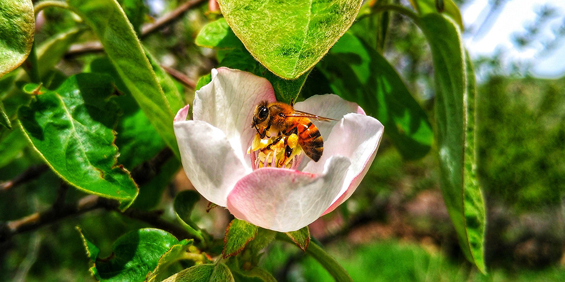 plaga de avispones asesinos un peligro para las abejas
