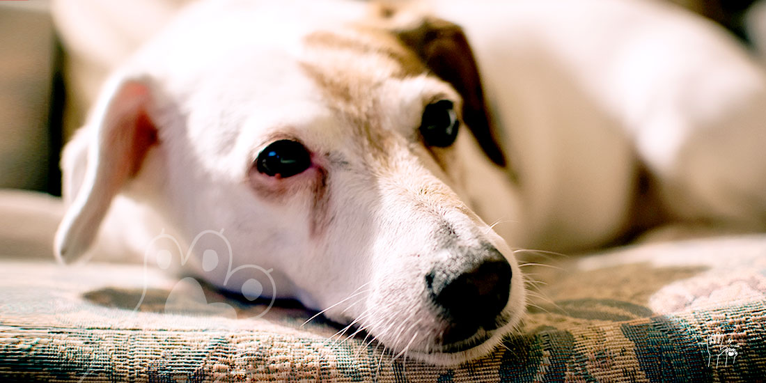 vómito amarillo de tu perro