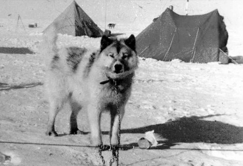 razas de perros que ya se extinguieron