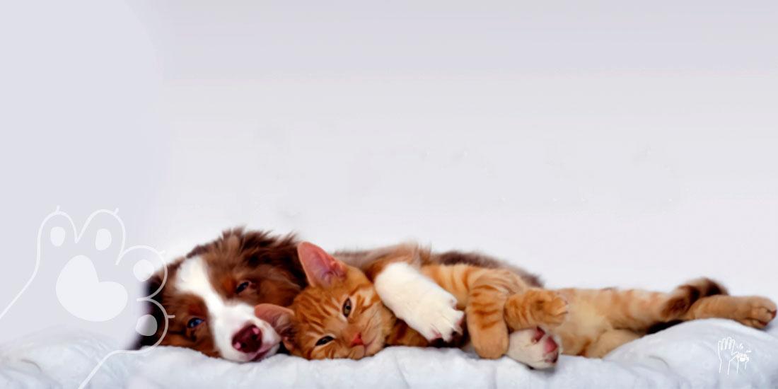 técnicas de relajación para tu mascota