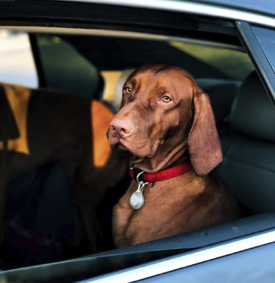 uber para mascotas será una realidad