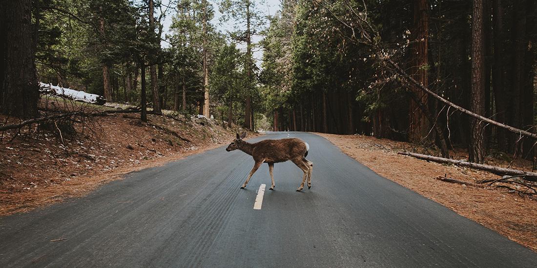 yosemite la vida salvaje recupera su territorio