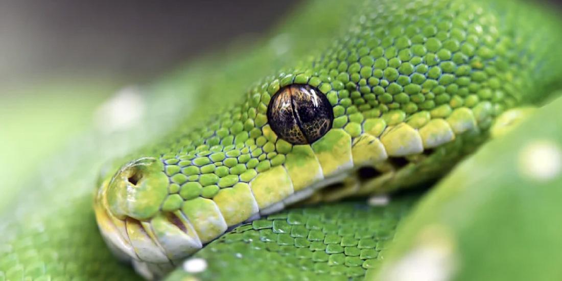 curiosidades de reptiles