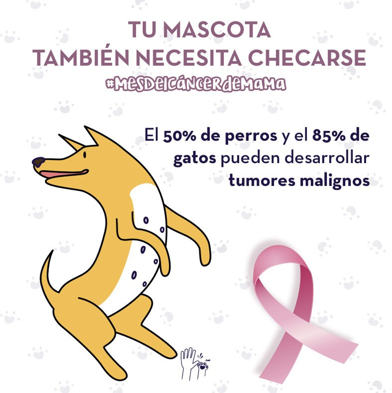 cáncer de mama en perros y gatos