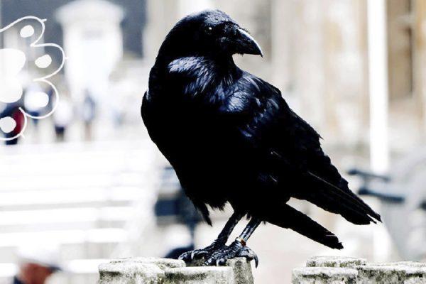 niña cria cuervos
