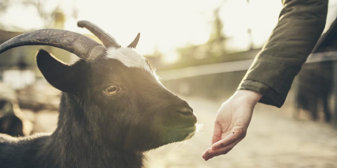 rituales con animales