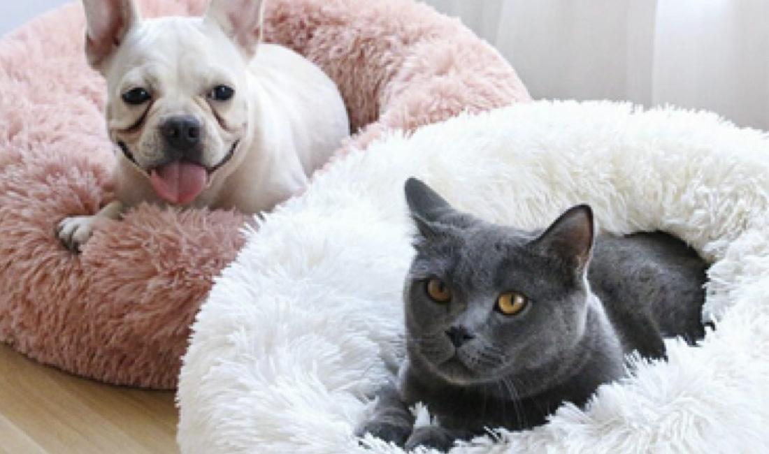 festival de mascotas en la condesa