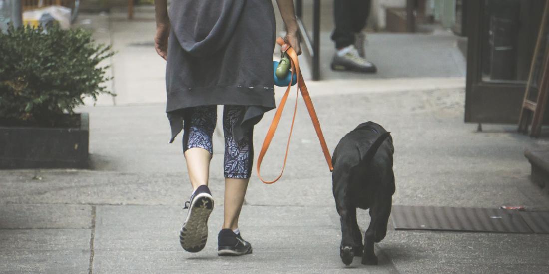 Obligación sacar a pasear a tu perro