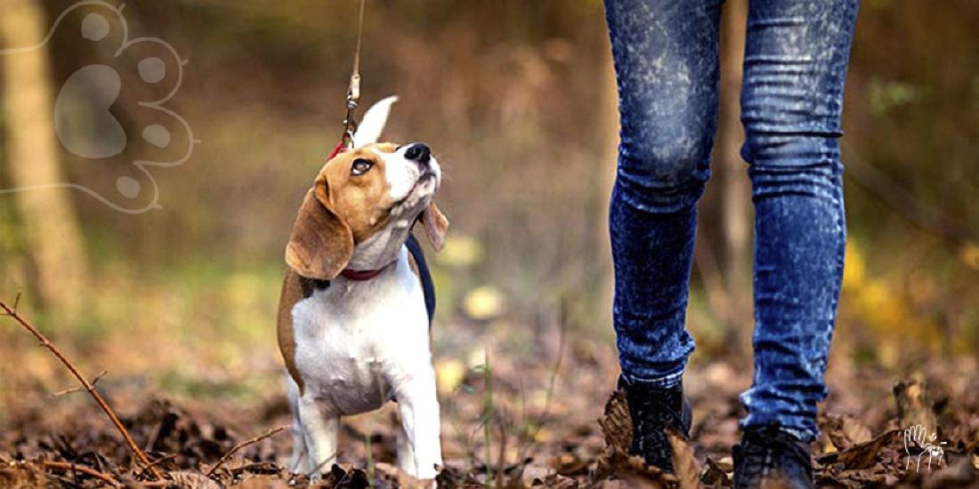 Obligación sacar a tu perro a pasear
