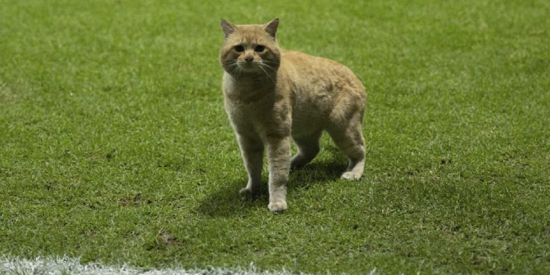 gato bayern munich