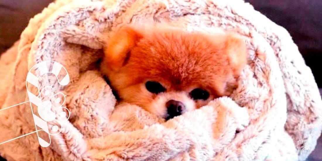 esta navidad protege a tu perro del frío
