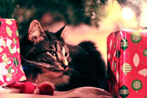 cuida tu gato