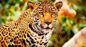 10 animales mexicanos que ya no podrás conocer