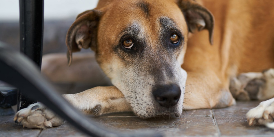 18 años de cárcel para todo aquel que maltrate animales
