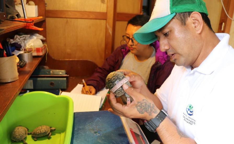 tortuga Diego