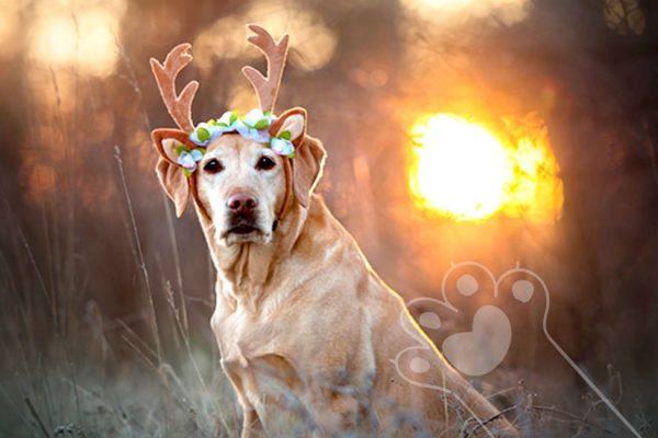 signo zodiacal de tu mascota