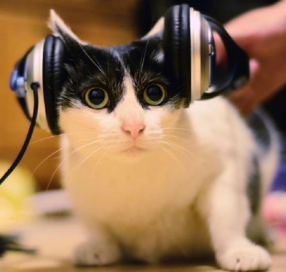 playlist para tu mascota