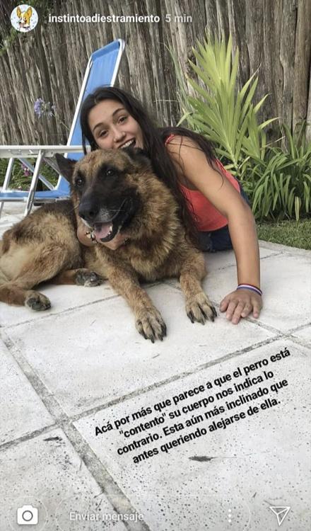 tal vez a tu perro no le gustan las selfies
