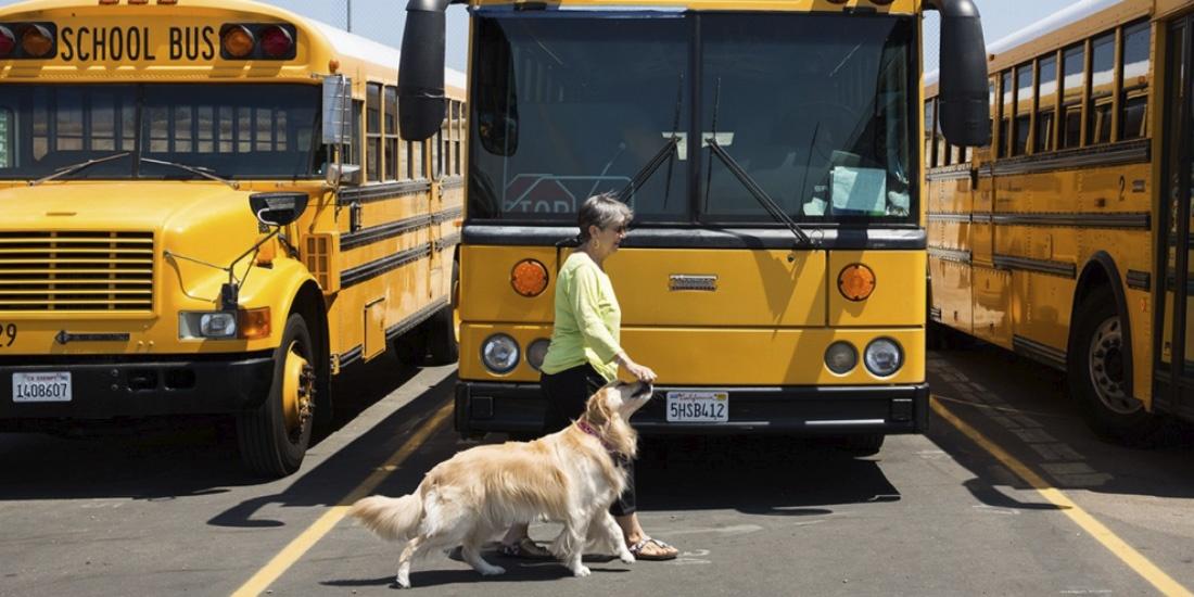 perros en las escuelas