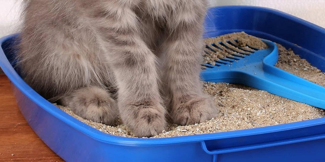 arena ecológica para tu gato