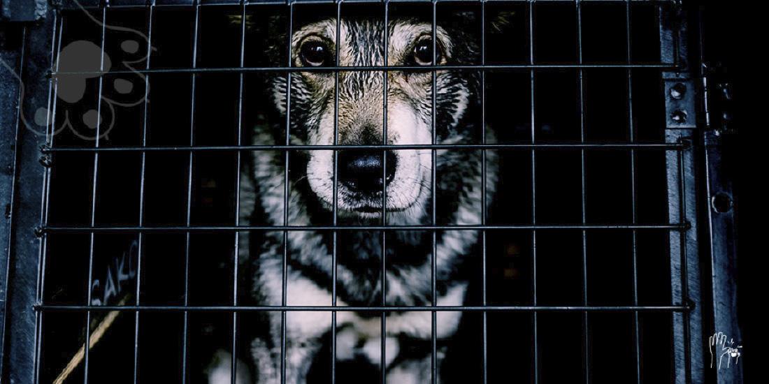 más de 100 perros hacinados