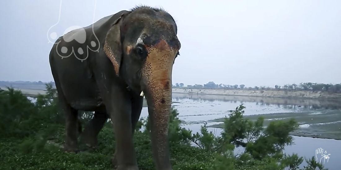 elefante rescatado en la india