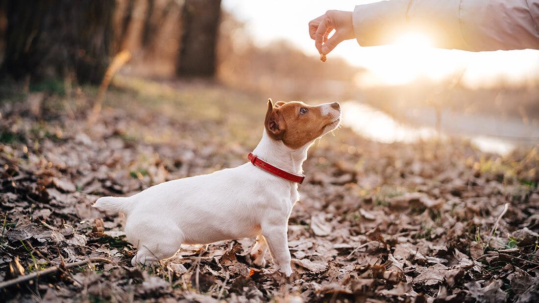 dueño con su perro en un parque