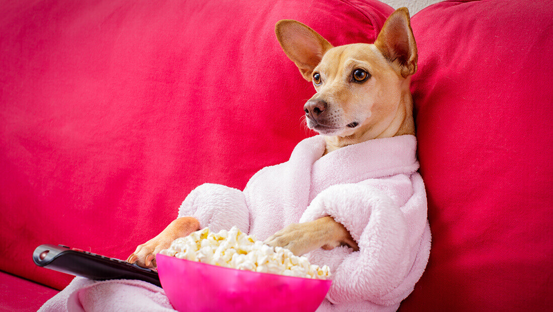perro viendo la tele
