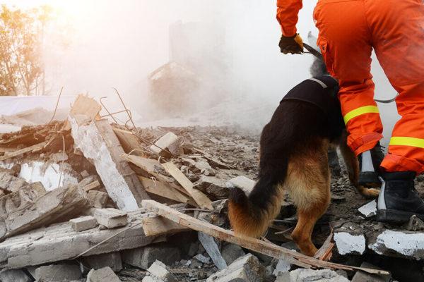 perro y persona rescatista