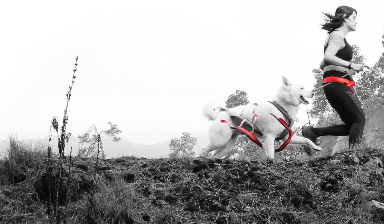 DOG RUNNING CDMX