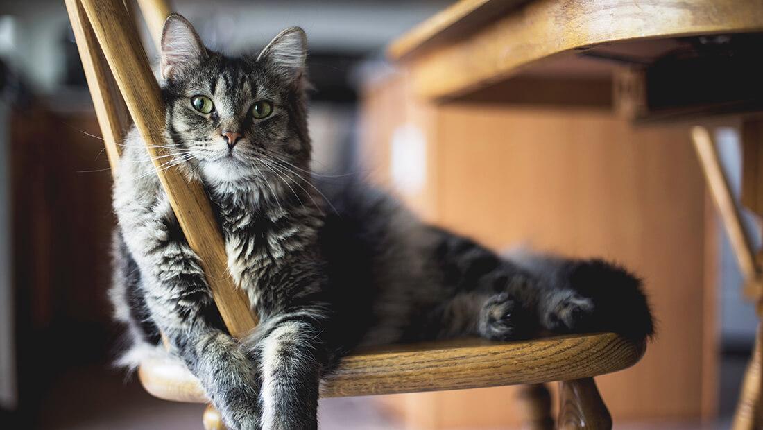 gato acostado en una silla