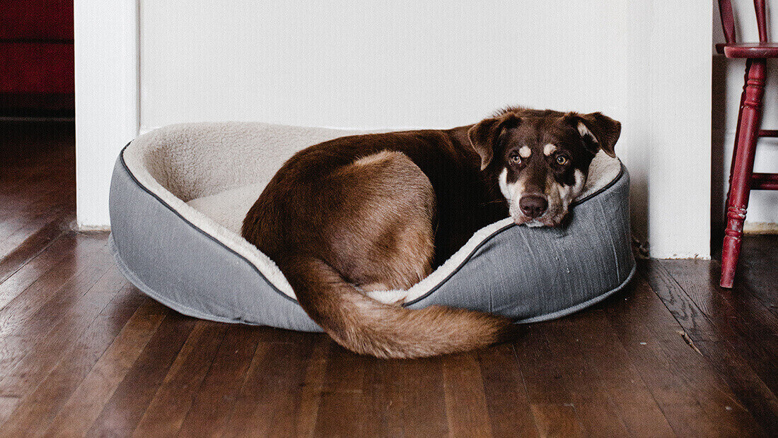 embarazo de nuestro perro