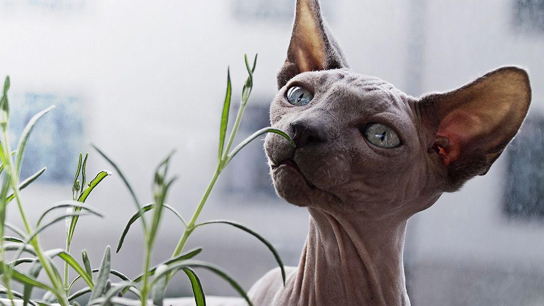 gato comiendo plantas