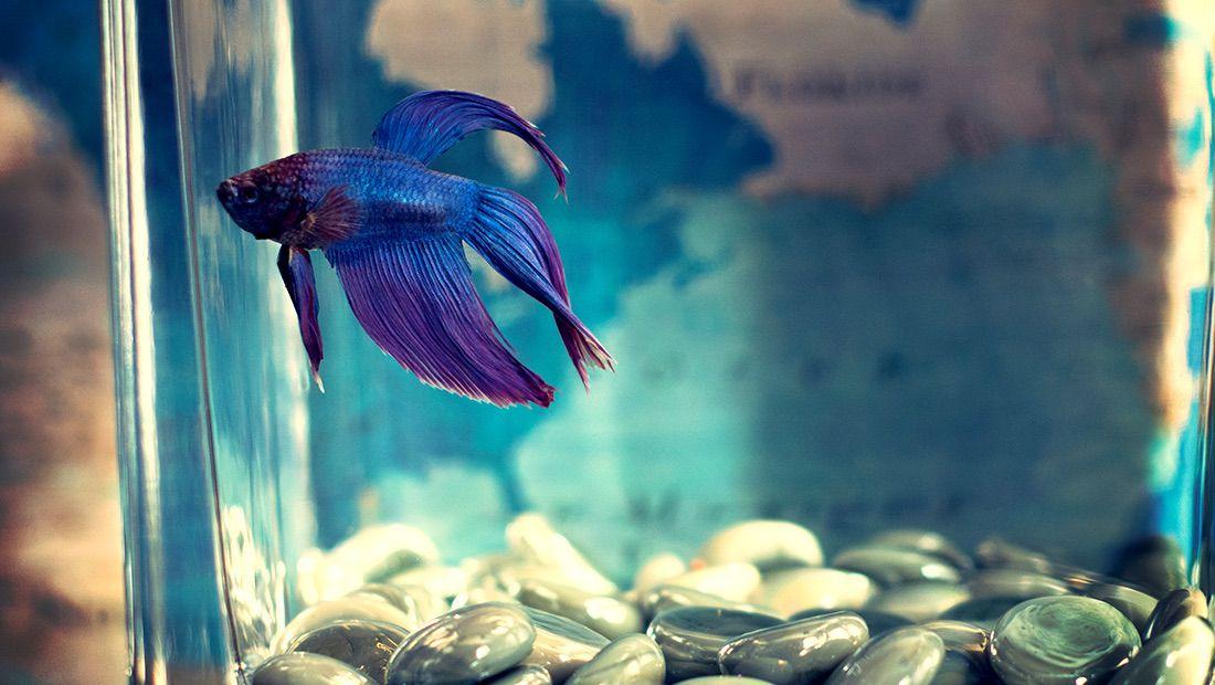 pez beta
