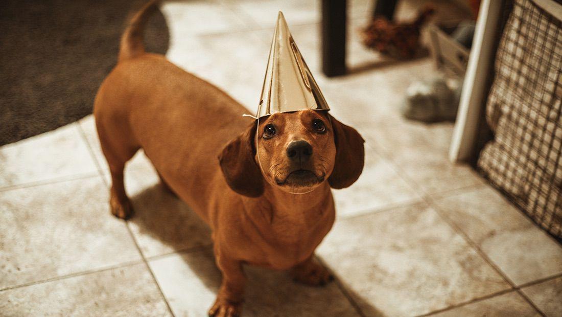 perro en su cumpleaños