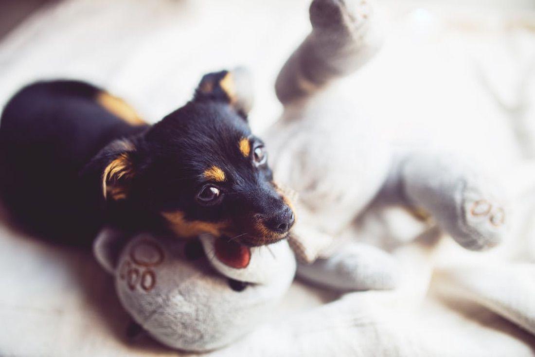 perro con peluche