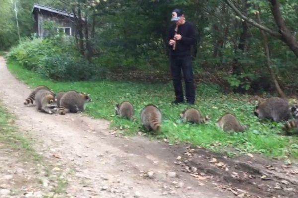 hombre toca la flauta para mapaches en N.Y.