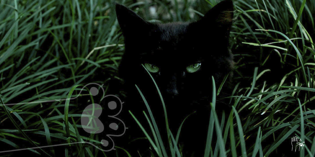museo gatos negros
