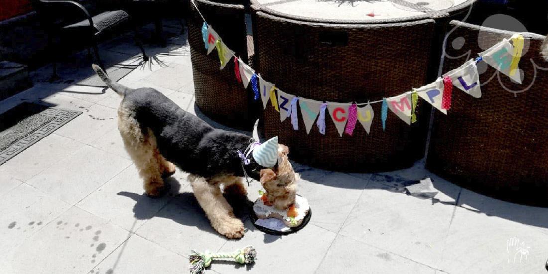 cumpleaños para perros