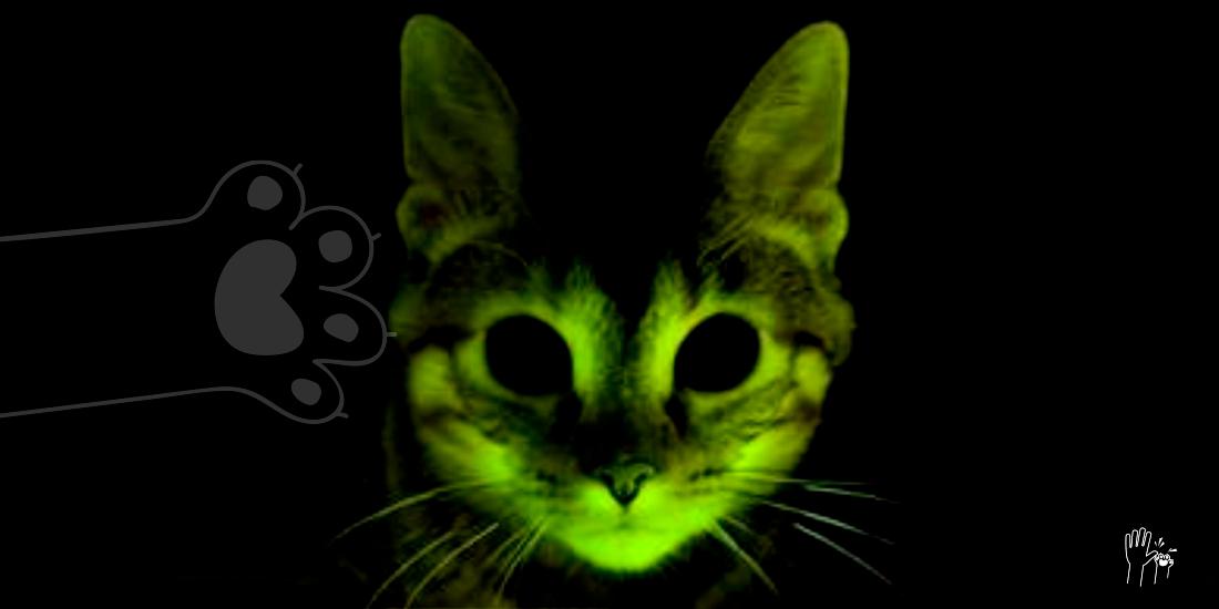 Gatos Que Brillan En La Oscuridad